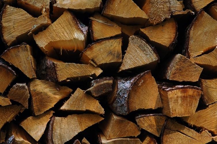 ExkursionenGOMS Holzenergie