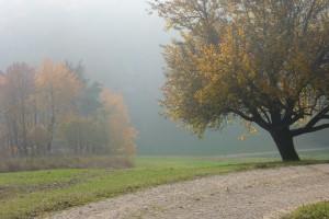 Walkingtrail Schenkenbergertal