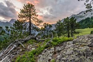 Naturwald Crap Alv - Ervedi