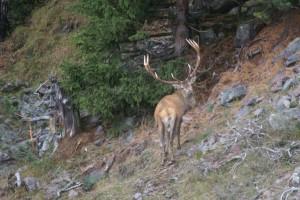 Wildbeobachtungen Val d'Err