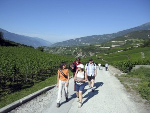 Vineyard walk with a Ranger