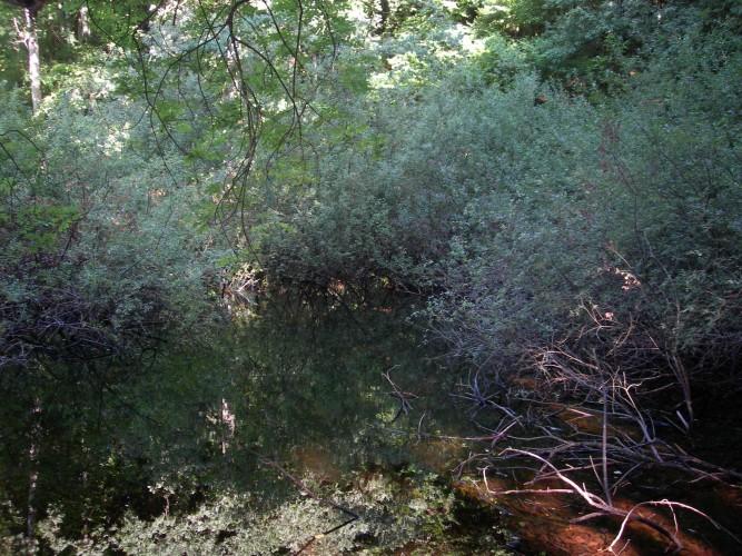 Réserve naturelle, Bois Chênes