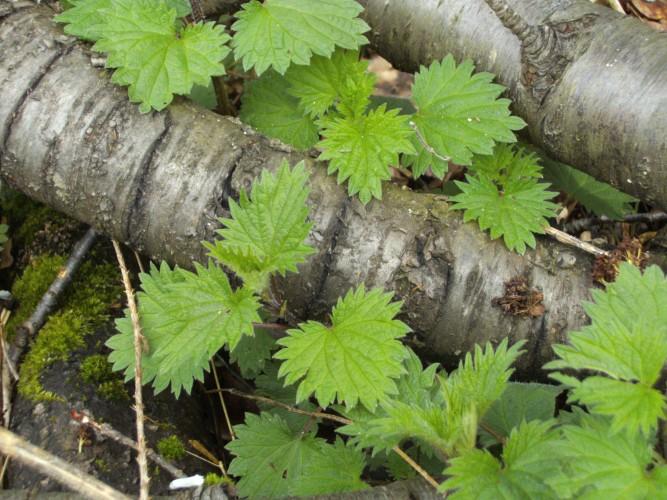 Kräuterwanderung – Essbare Wildpflanzen in Wald & Wiese