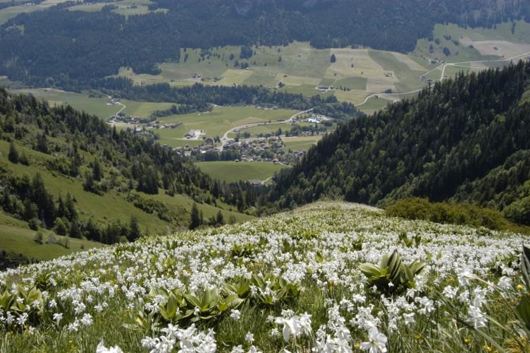 Sentier botanique des Choucas
