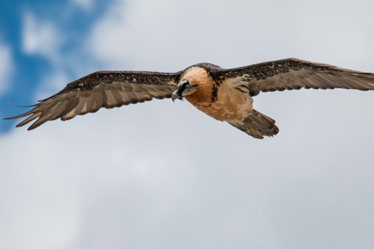 Wildtierbeobachtung - Erlebnisangebot - © Ivan Tschenett
