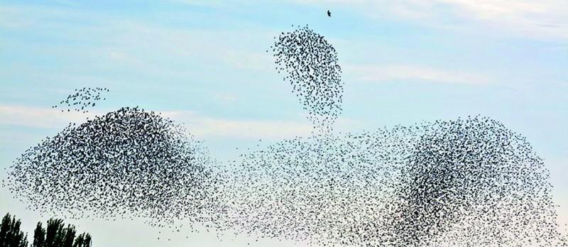 Exkursion Naturschau Vogelzug