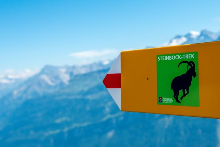 Steinbock Trek Rothorn_Tag 1
