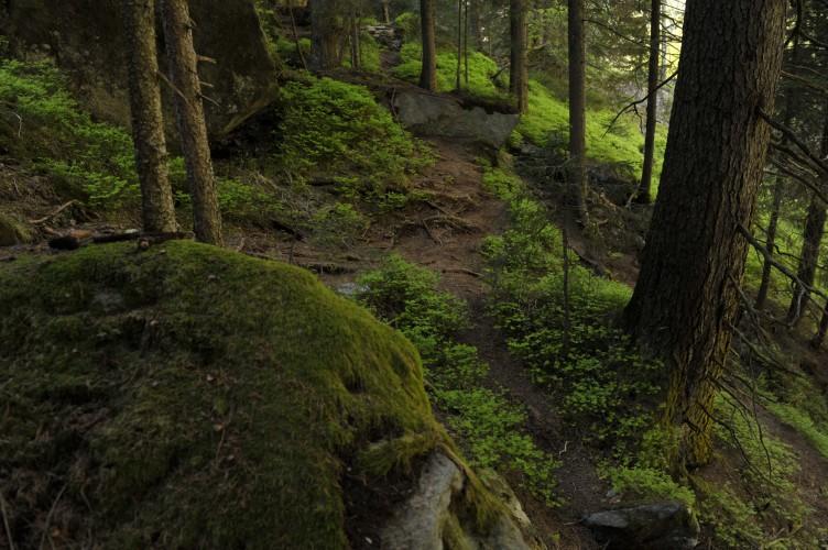 Boulderparadies Magic Wood