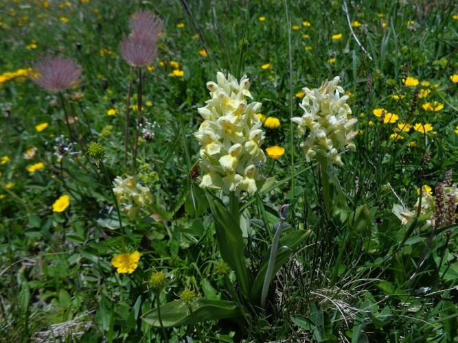 Orchideen im Bergfrühling