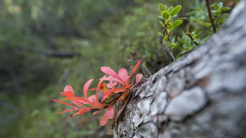 Botanische Dauerbeobachtung