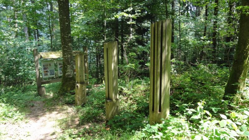 Rendez-vous forêt bernoise