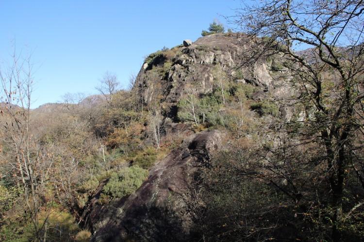 Die Dynamiken des Maia-Waldes