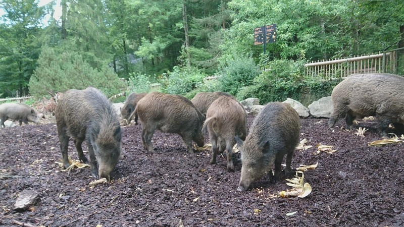 20 Minuten – Bei den Wildschweinen zu Besuch