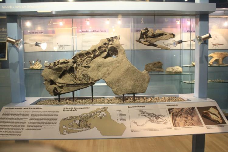 Le musée des sauriens à Frick