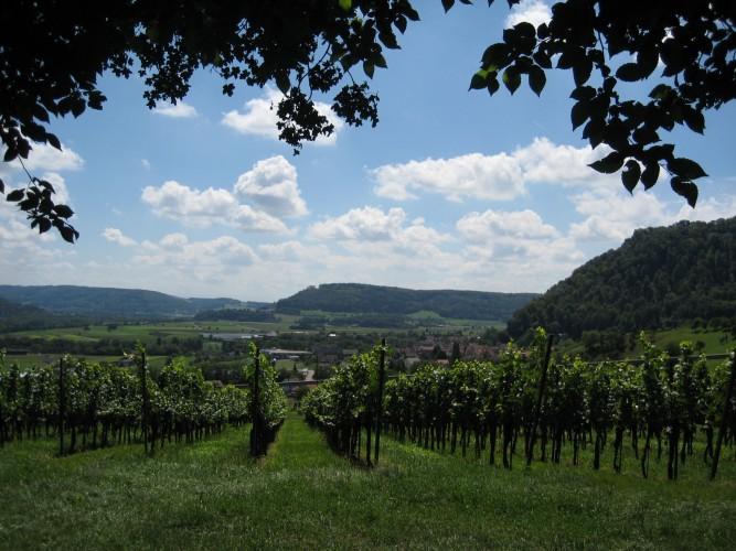 Villigen: Weingut Schödler