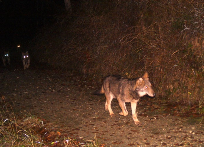 Projekttag «Umgang mit dem Wolf»