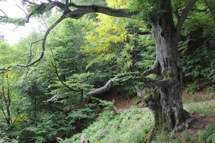 Heiliger Wald Mergugno: Mensch