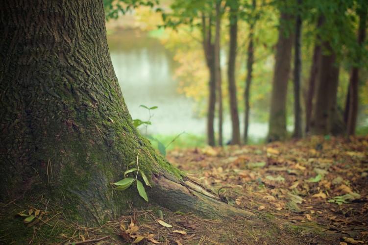 En forêt le temps d'un instant