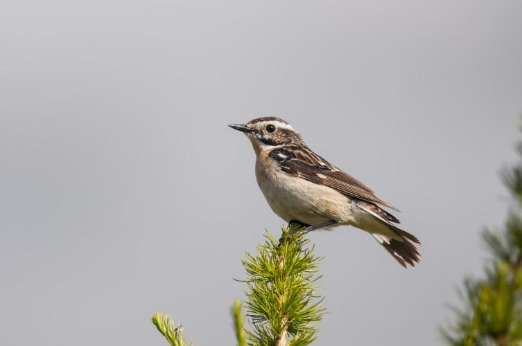 Zugvögel im Leukerfeld