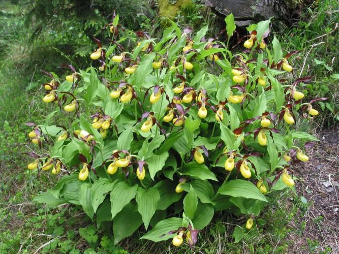 Orchideenwanderung Wiesen