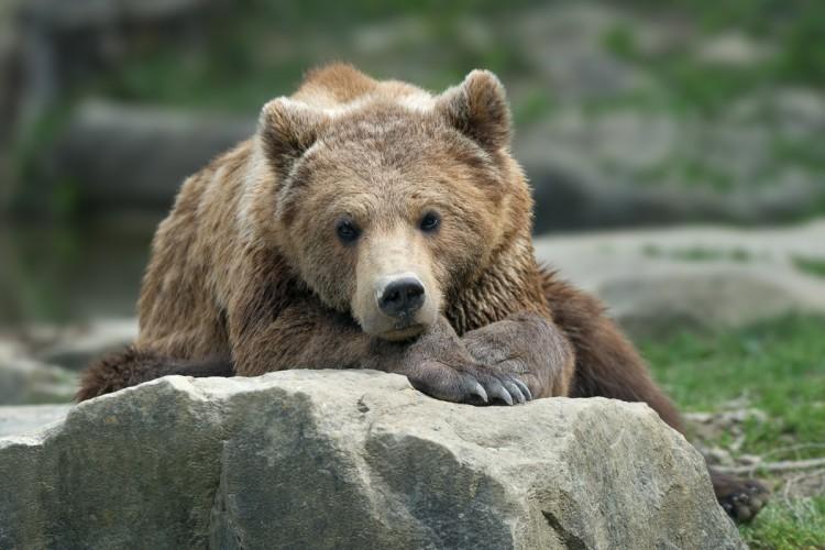 Luchs und Bär