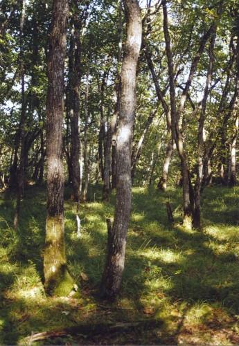 Bois de Chêne Echilly