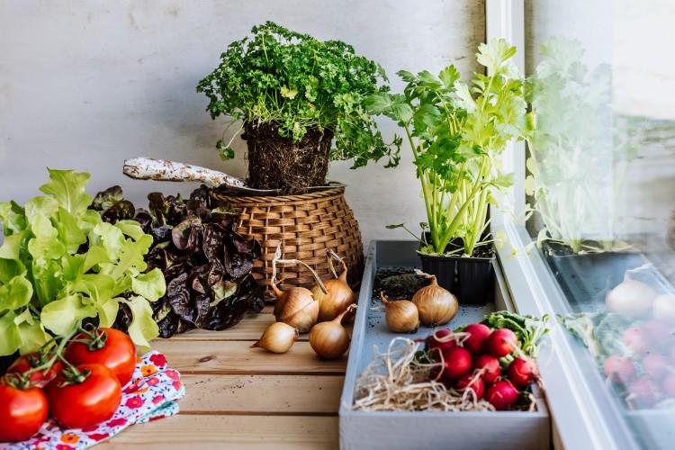 Gemüse und Pflanzen der VEBO Gärtnerei Matzendorf