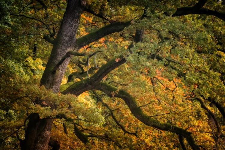 Achtsamer Waldspaziergang Herbst