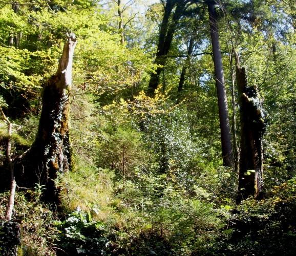 Langenberg–Türlen