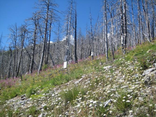 La forêt incendiée
