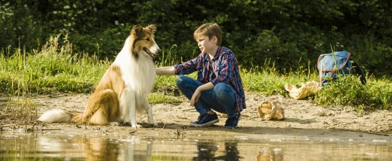 Kino: Lassie – Eine abenteuerliche Reise
