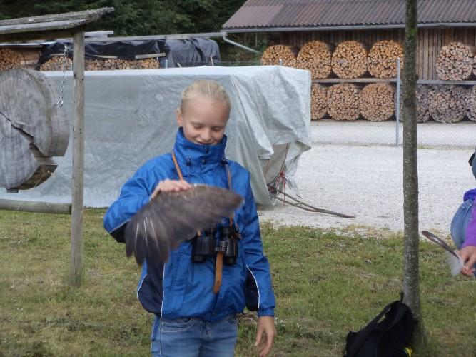 Migration d. oiseaux d'automne