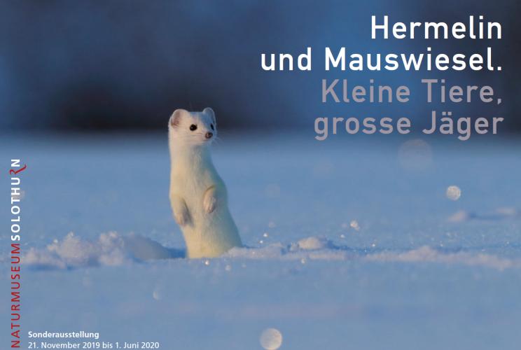 Sonderausstellung Hermelin und Mauswiesel