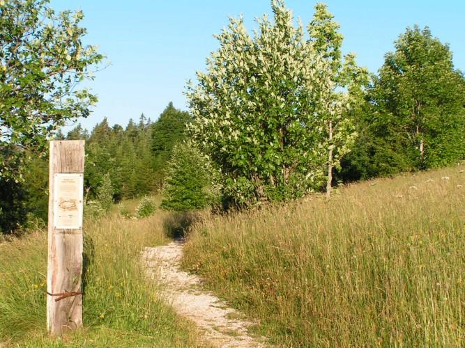 Sentier du Sapin à Siméon