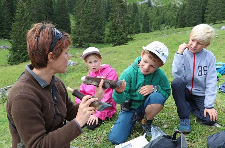 Im Lebensraum der Alpentiere