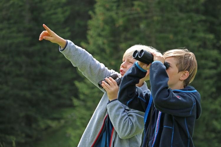 Alpentier-Exkursionen