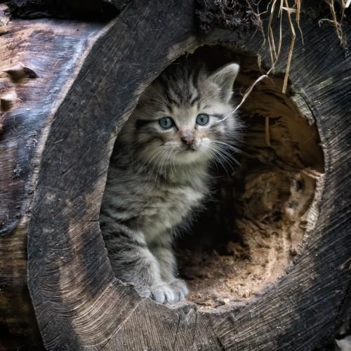 Tierpfleger vor Ort - Wildkatze