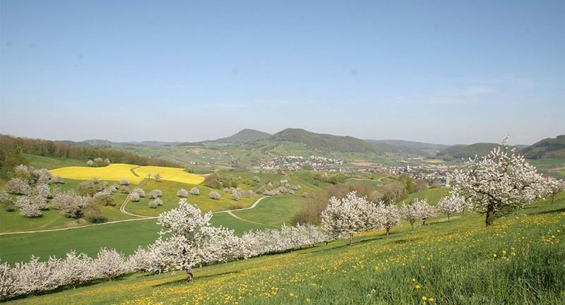 Landschaftsmedizin Chriesiwäg