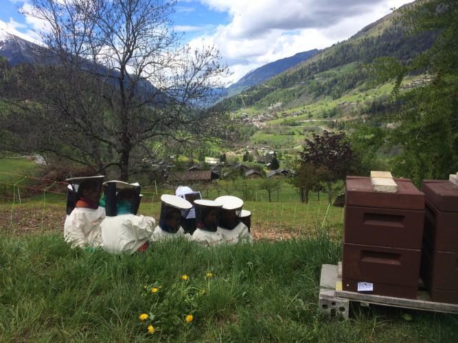 Exkursion «Bienen»