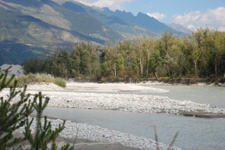 Flussuferläufer