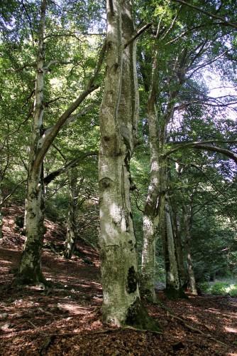 Palagnedra: village et forêt