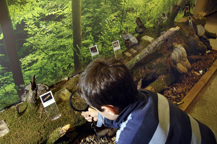 Naturmuseum im Besucherzentrum