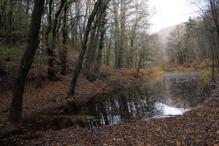 Teich im Maia-Park