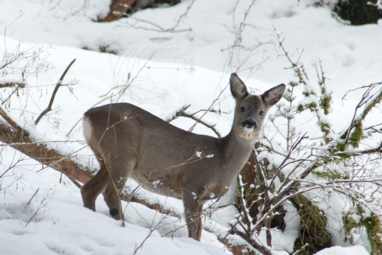 Wildtiere im Winter beobachten
