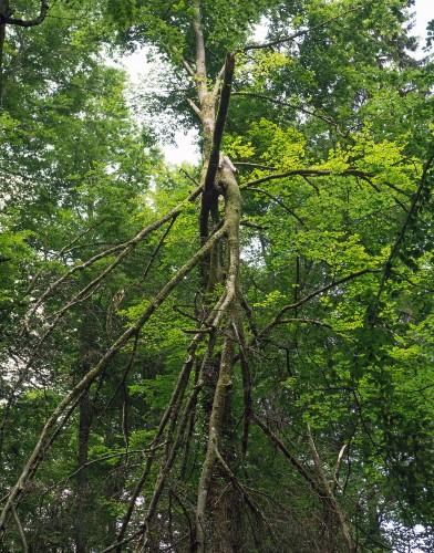 Achtsamer Waldspaziergang Sommer