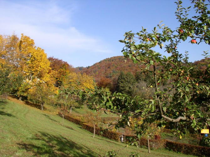 Arboretum national