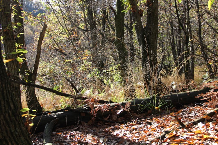 Dynamik des Waldreservats Maia