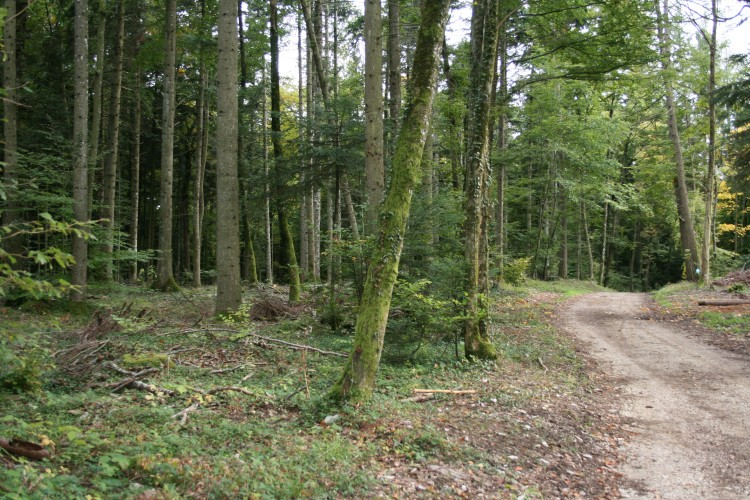 Bois de Forel-Romainmôtier