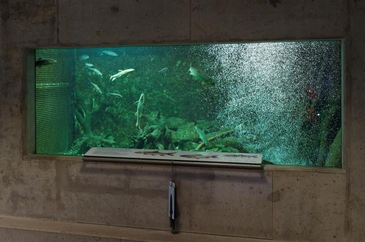 Tieranlage Fischotter-Aquarium