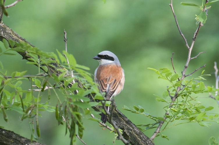 Vögel im Waldbrandgebiet